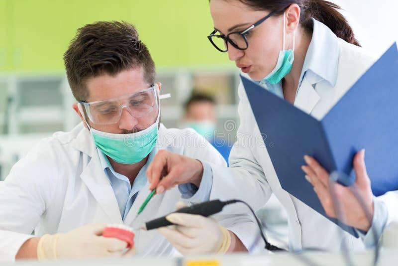 Estudiantes jovenes ocupados de la estomatología que trabajan cuidadosamente en modelos anatómicos fotos de archivo libres de regalías