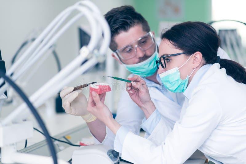 Estudiantes jovenes ocupados de la estomatología que trabajan cuidadosamente en modelos anatómicos imágenes de archivo libres de regalías