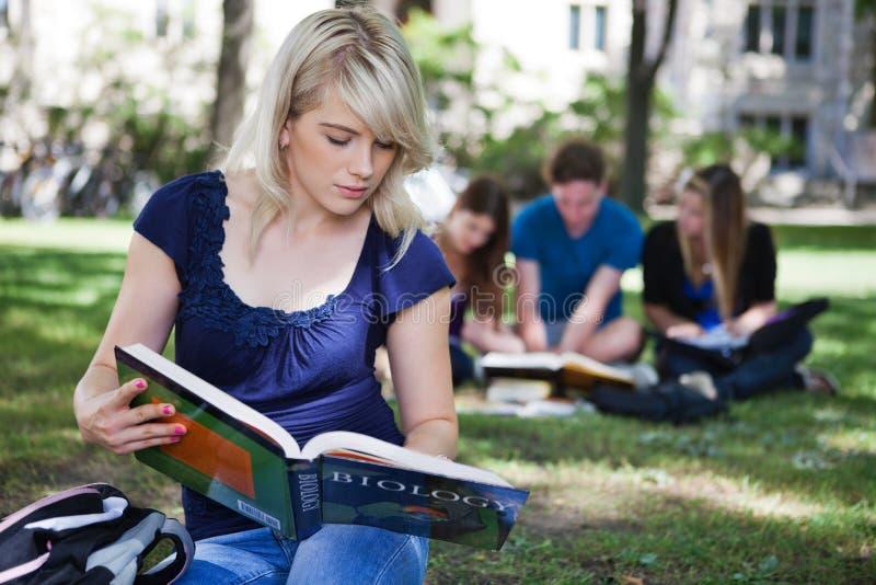 Estudiantes que estudian en campus fotografía de archivo