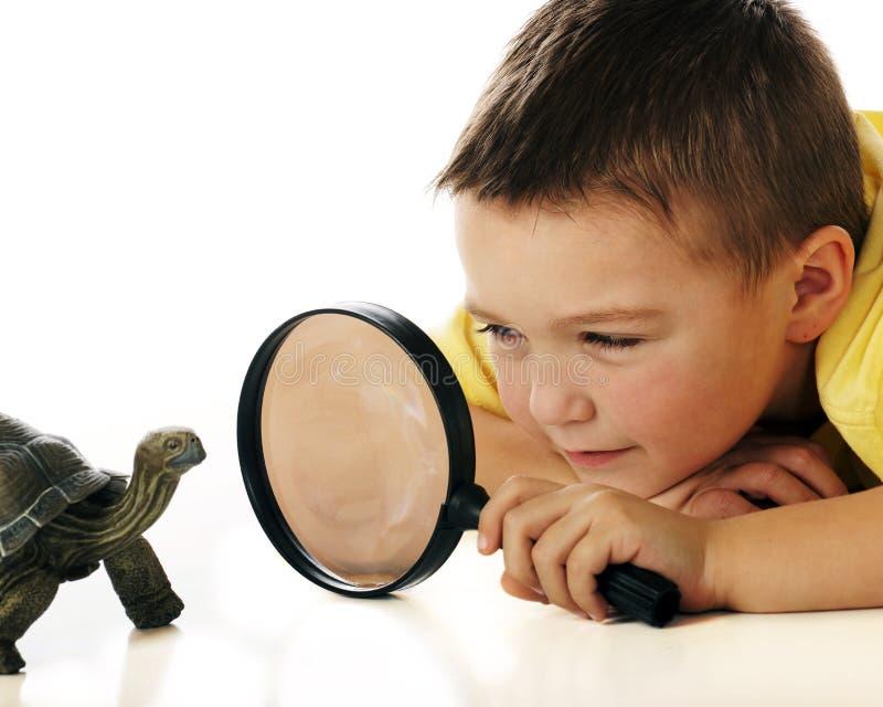 Estudiar la tortuga fotografía de archivo