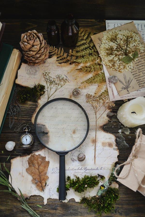 Estudio botánico del vintage a través de una lupa imagenes de archivo