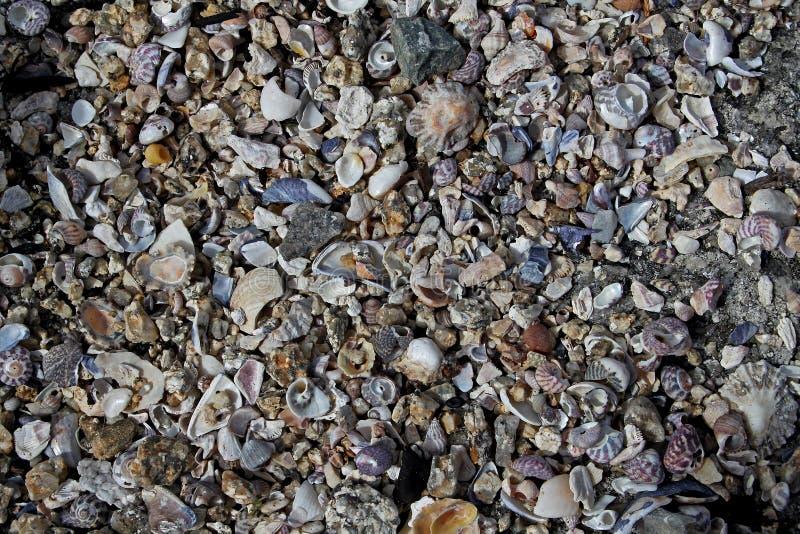 Estudio de la roca, de guijarros y de pedazos de la cáscara fotografía de archivo libre de regalías
