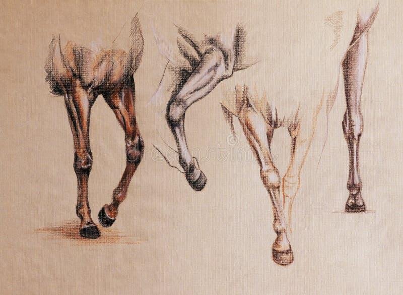 Estudio de las piernas del caballo stock de ilustración