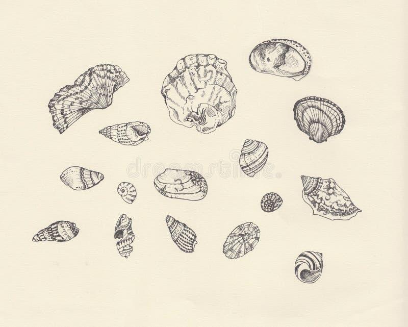 Estudio del shell del mar stock de ilustración