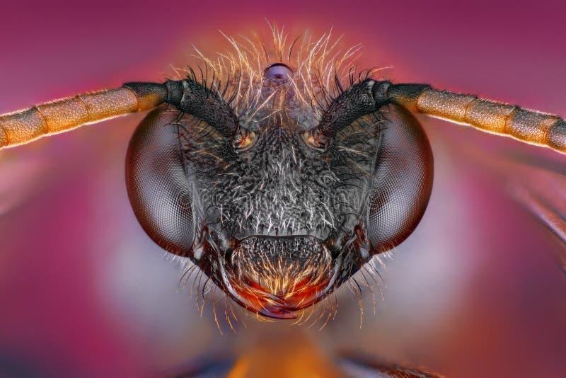 Estudio sostenido y detallado extremo de la pista de la abeja imagenes de archivo
