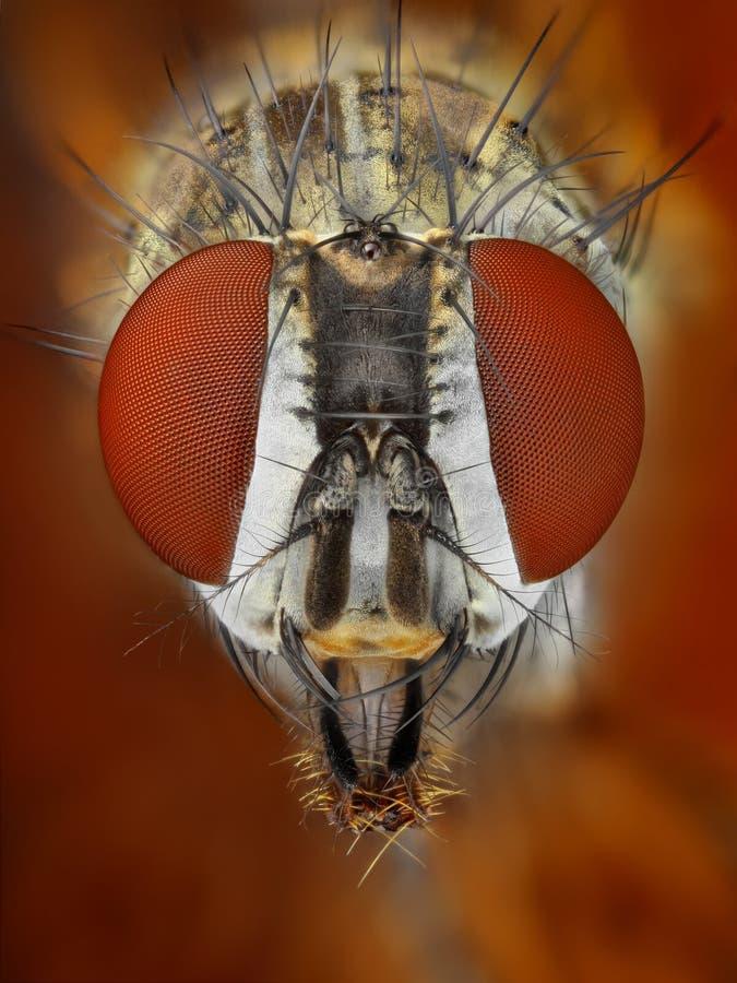 Estudo afiado e detalhado extremo da mosca imagens de stock royalty free