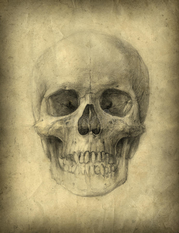 Estudo de crânio ilustração stock