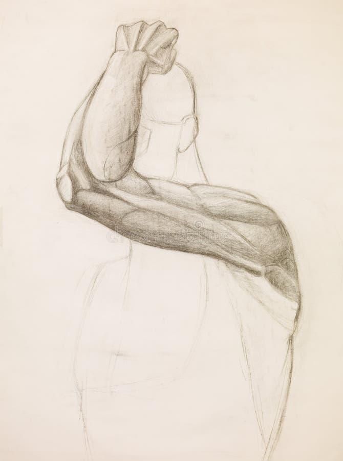 Estudo humano do braço, esboço do lápis ilustração do vetor