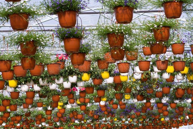Estufa com flores foto de stock royalty free
