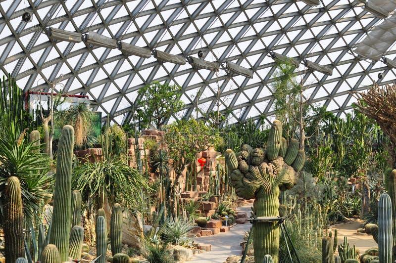 Estufa do deserto do jardim botânico de Chenshan foto de stock royalty free