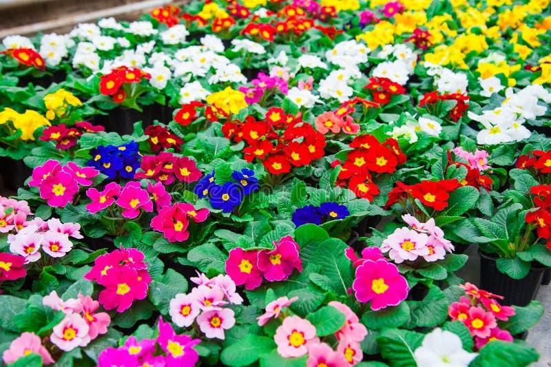 Estufa do jardim agribusiness fotografia de stock
