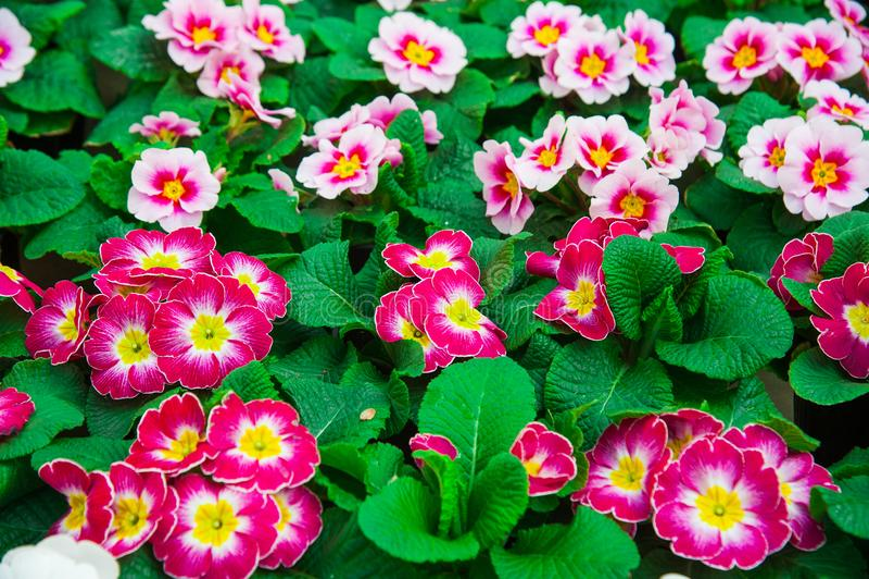 Estufa do jardim agribusiness imagens de stock royalty free