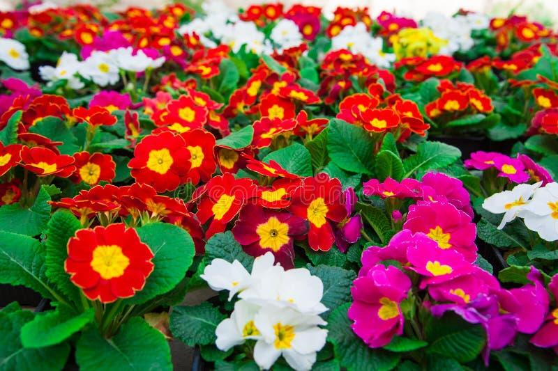 Estufa do jardim agribusiness fotos de stock