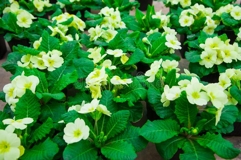 Estufa do jardim agribusiness imagem de stock royalty free