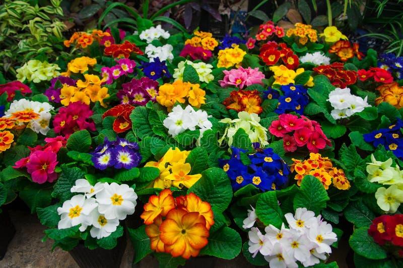 Estufa do jardim agribusiness foto de stock royalty free
