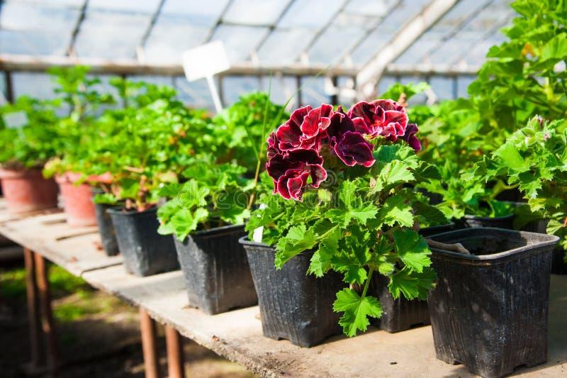 Estufa do jardim agribusiness fotos de stock royalty free