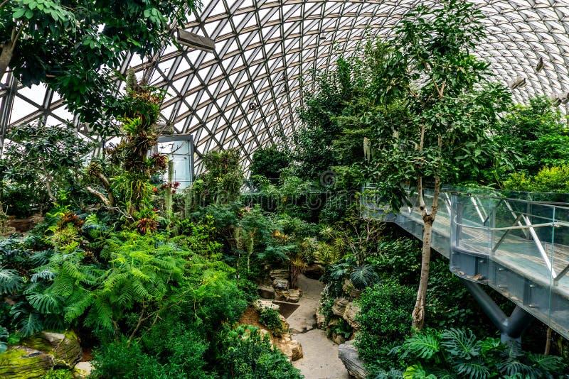 Estufa 8 do jardim botânico de China Shanghai fotografia de stock royalty free