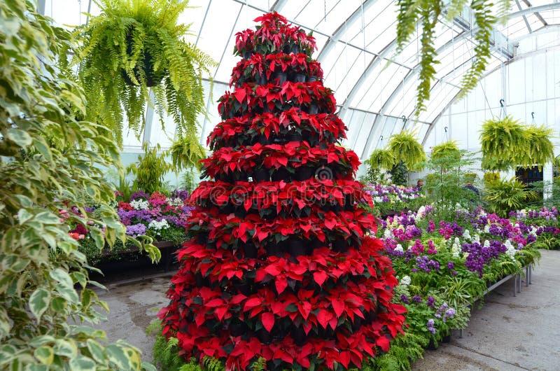 Estufa do jardim botânico de Christchurch - Nova Zelândia foto de stock royalty free