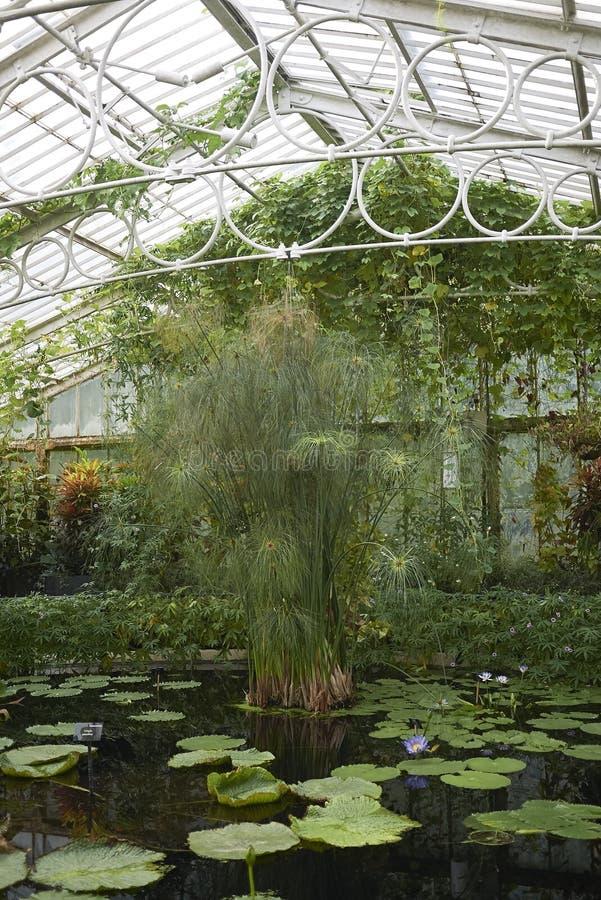 Estufa do jardim de Kew imagem de stock