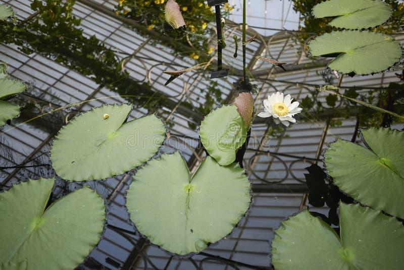 Estufa do jardim de Kew foto de stock royalty free