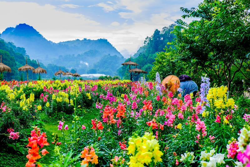 Estufa e jardim do Mt Vernon imagens de stock royalty free