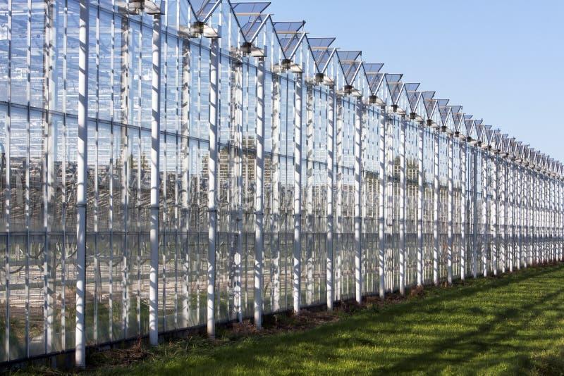 Estufa em Westland nos Países Baixos foto de stock royalty free