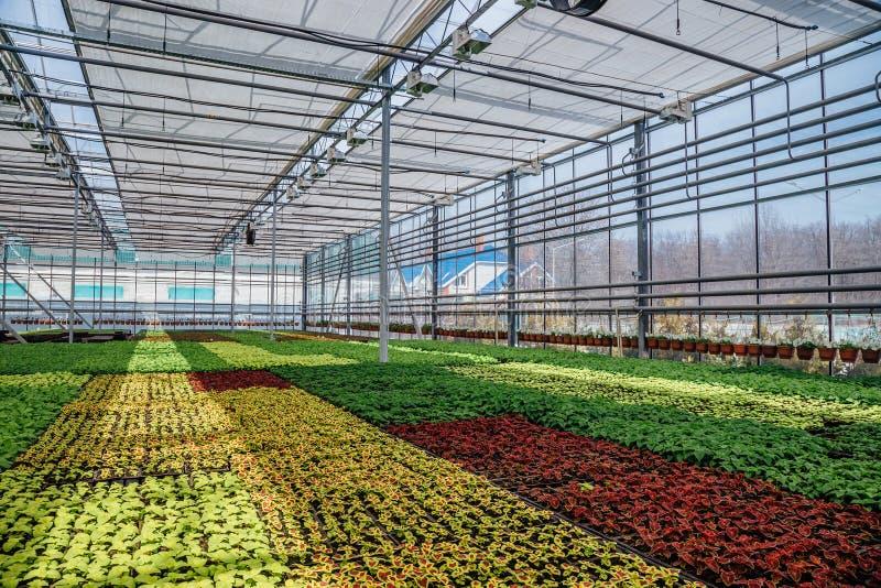 Estufa hidropônica moderna com sistema de controlo do clima para o cultivo das flores e de plantas decorativas para jardinar fotografia de stock royalty free