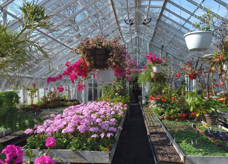 Estufa para flores foto de stock royalty free