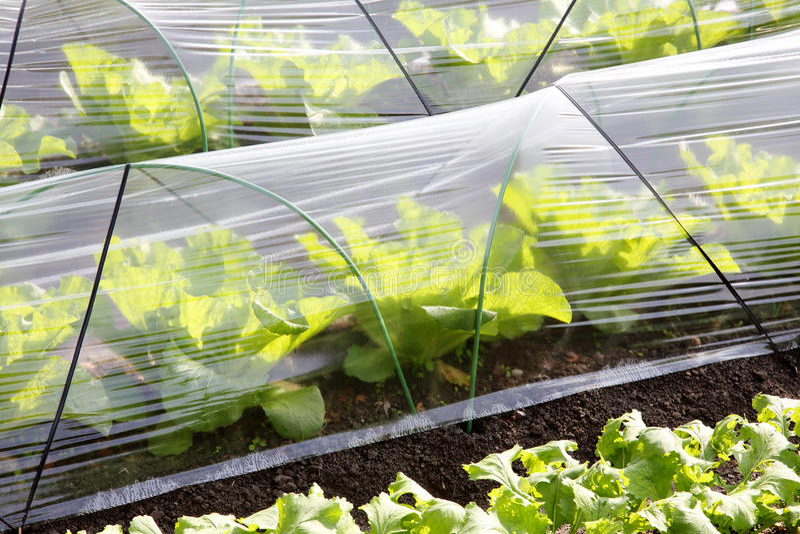 Estufa vegetal fotografia de stock royalty free