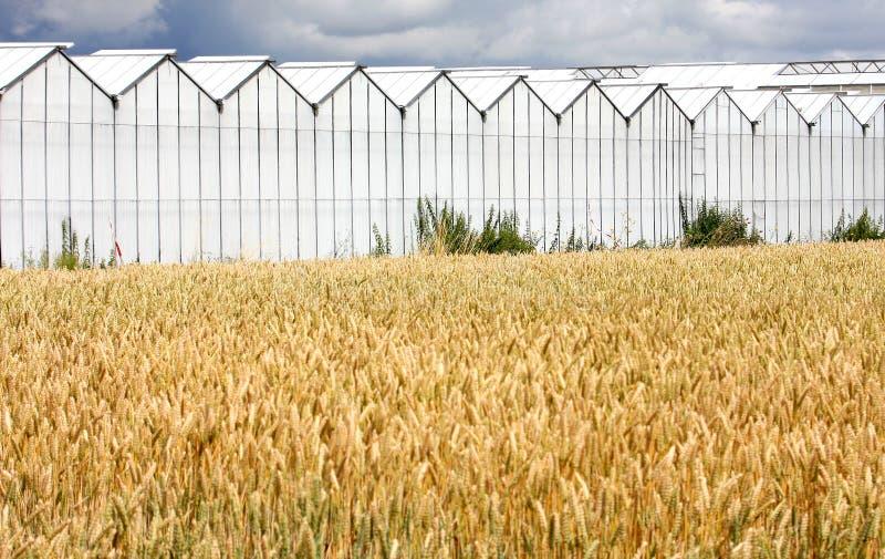 Estufas e cropland em Holland foto de stock