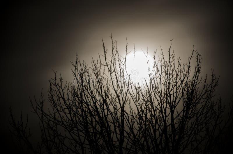Estupendo-luna foto de archivo