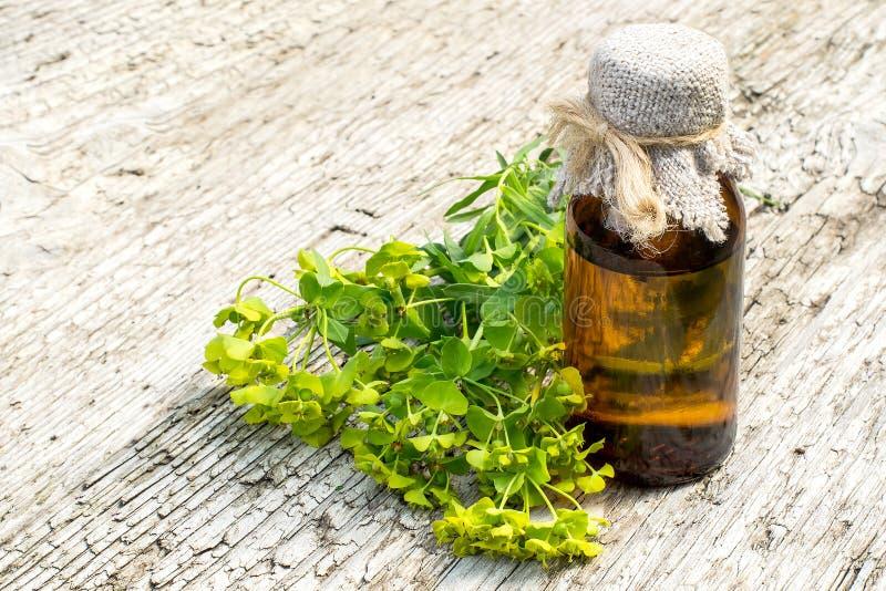 Esula del euforbio de la planta medicinal y botella farmacéutica fotografía de archivo