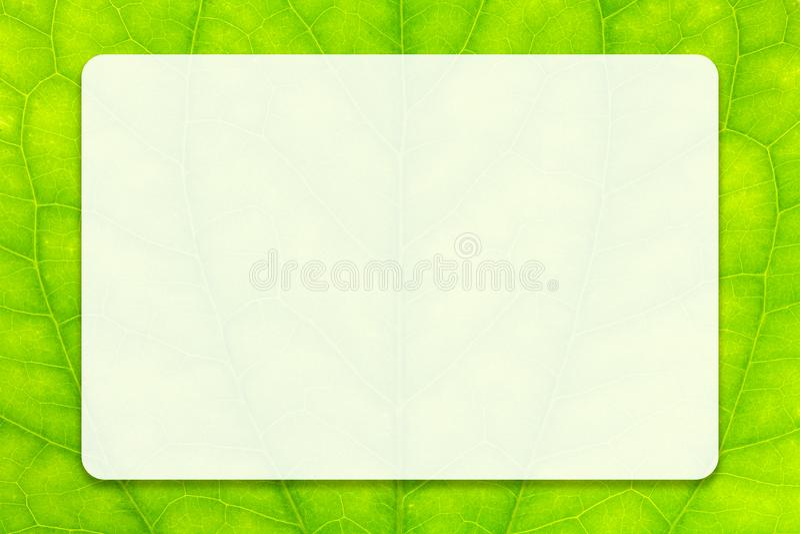 Esvazie o espaço branco no fundo verde da folha para o projeto da educação do negócio e de conceito de uma comunicação fotos de stock