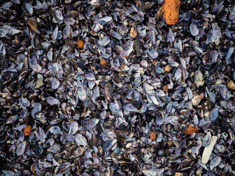 Esvazie o fundo natural do mexilhão do shell fotografia de stock