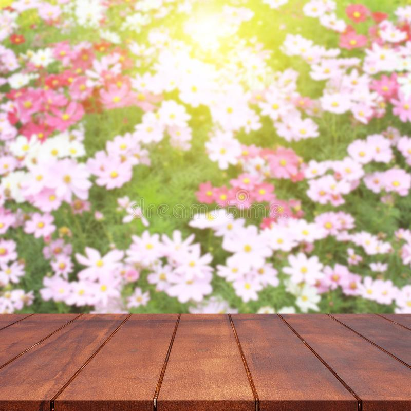 Esvazie a tabela superior de madeira e o fundo borrado da flor do cosmos imagem de stock royalty free