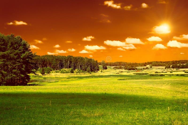 Esverdeie o campo, a floresta e o céu vermelho fotografia de stock