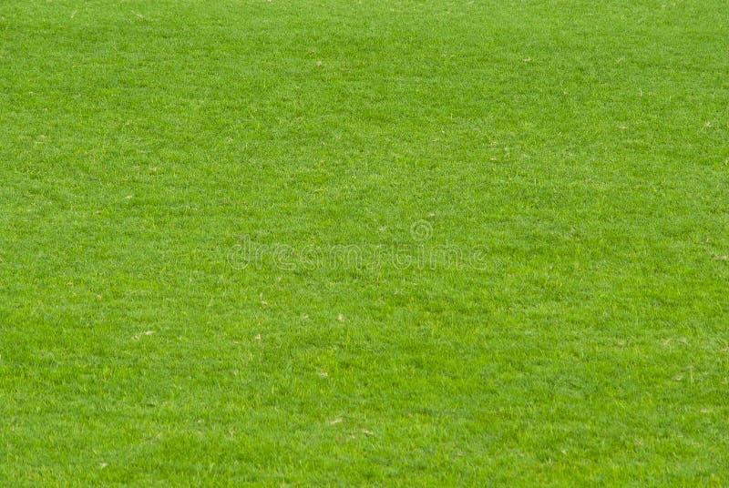 Esverdeie o gramado