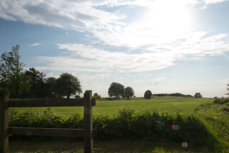 Esverdeie, salte campo com o sol brilhante acima do horizonte fotografia de stock