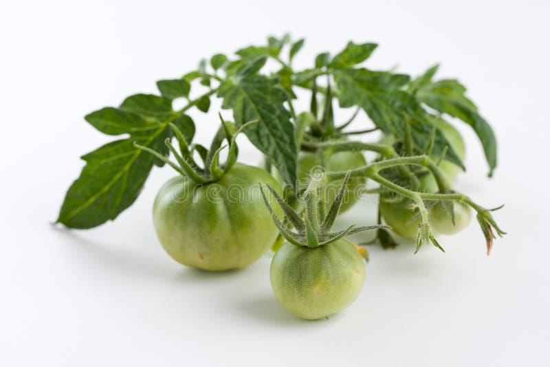Esverdeie tomates fotografia de stock
