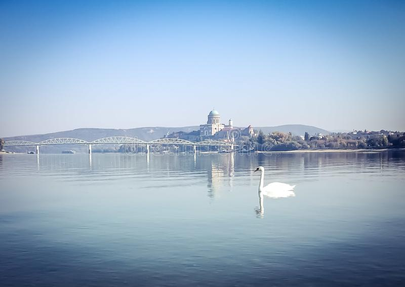 Esztergom. View of Esztergom from the River Danube with a lonely swan stock images