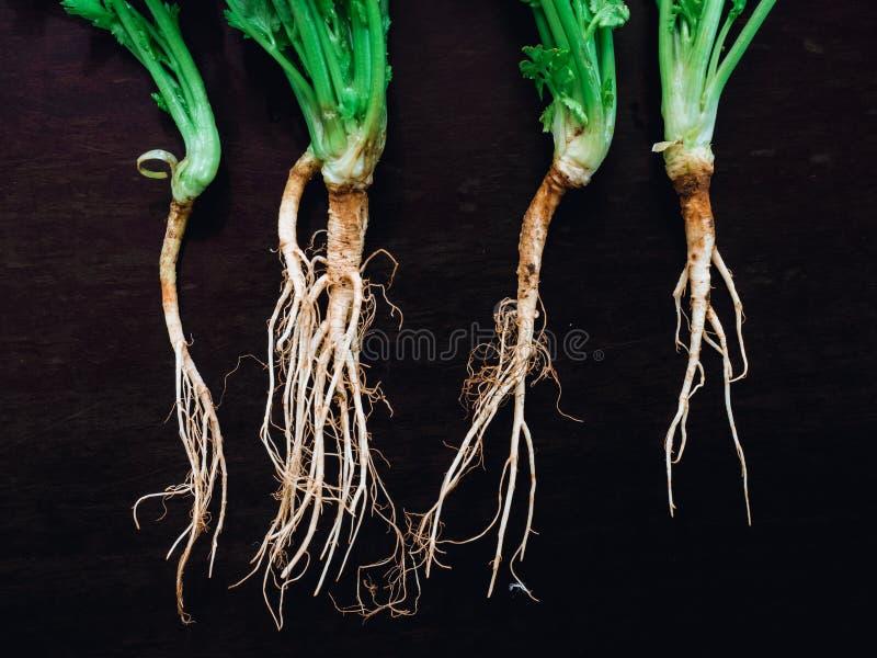 et x28 ; ressemblez au human& x29 ; la racine de la coriandre fraîche, cilantro sont ingredi photo stock