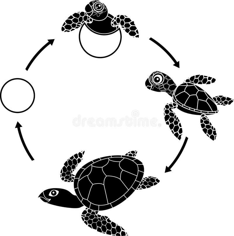 Etap życia denny żółw Sekwencja sceny rozwój żółw od jajka dorosły zwierzę royalty ilustracja