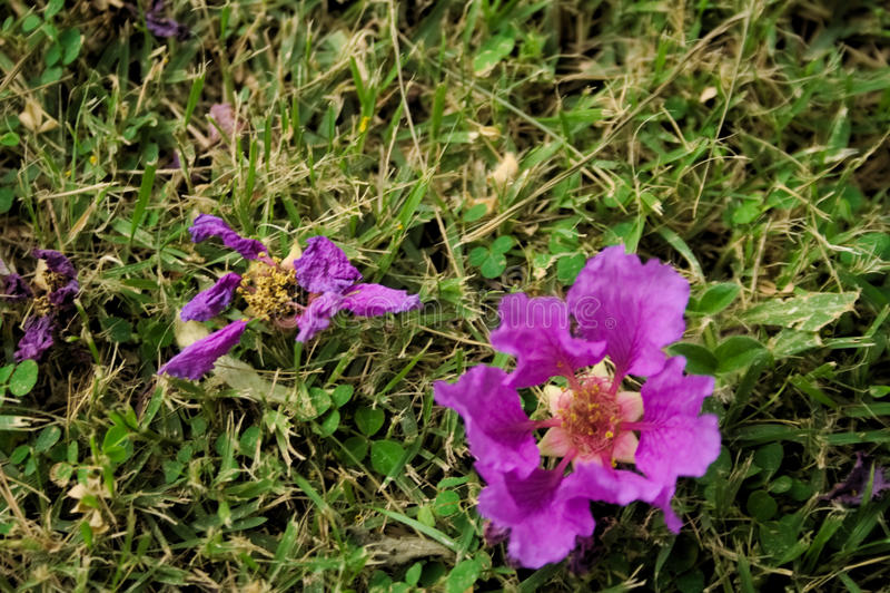 Etap życia kwiaty zdjęcie stock