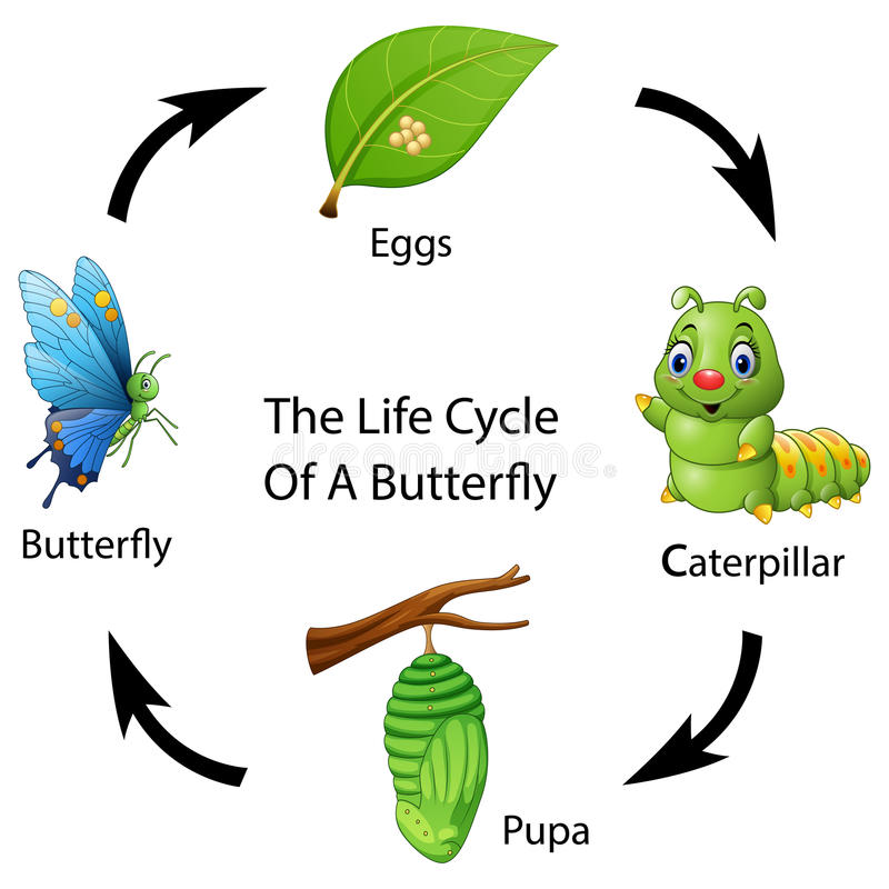 Etap życia motyl royalty ilustracja