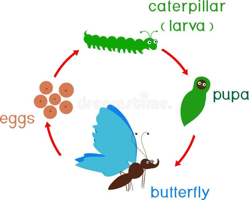 Etap życia motyl Sekwencja sceny rozwój od jajka dorosły insekt royalty ilustracja