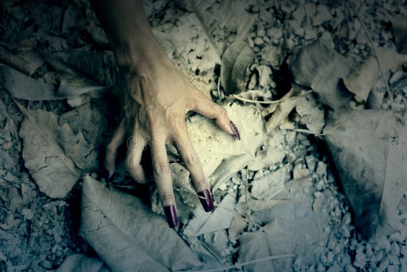 Etapa da mão da mulher no assoalho com folha seca imagem de stock