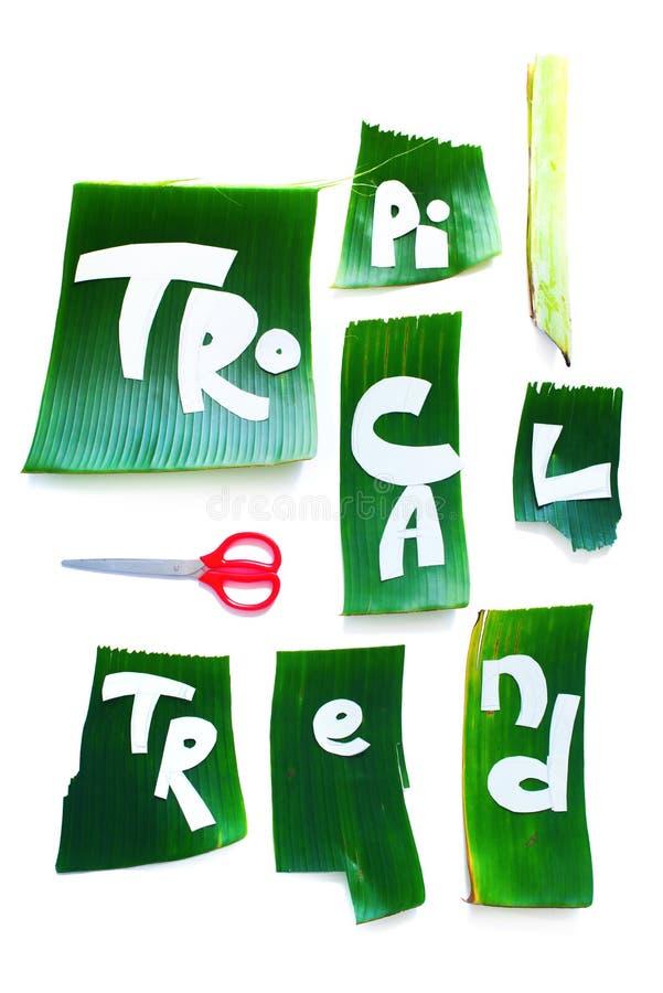 Etapa de la plantilla de la creación Letras TROPICALES de la palabra foto de archivo libre de regalías