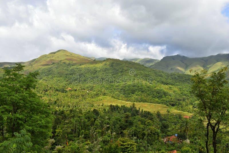 Etapas da montanha e paisagem verde luxúria fotos de stock