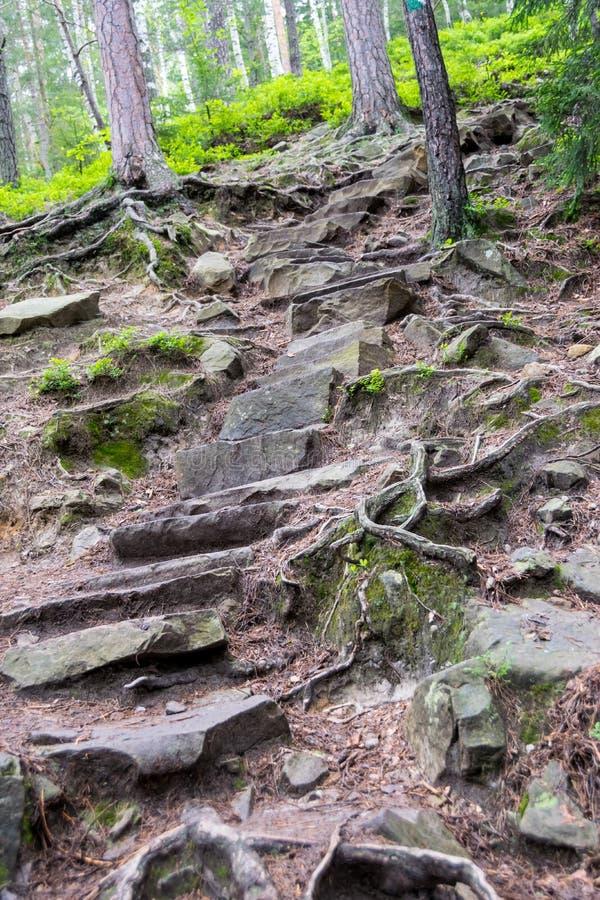 Etapas das pedras e das raizes no trajeto de floresta fotos de stock