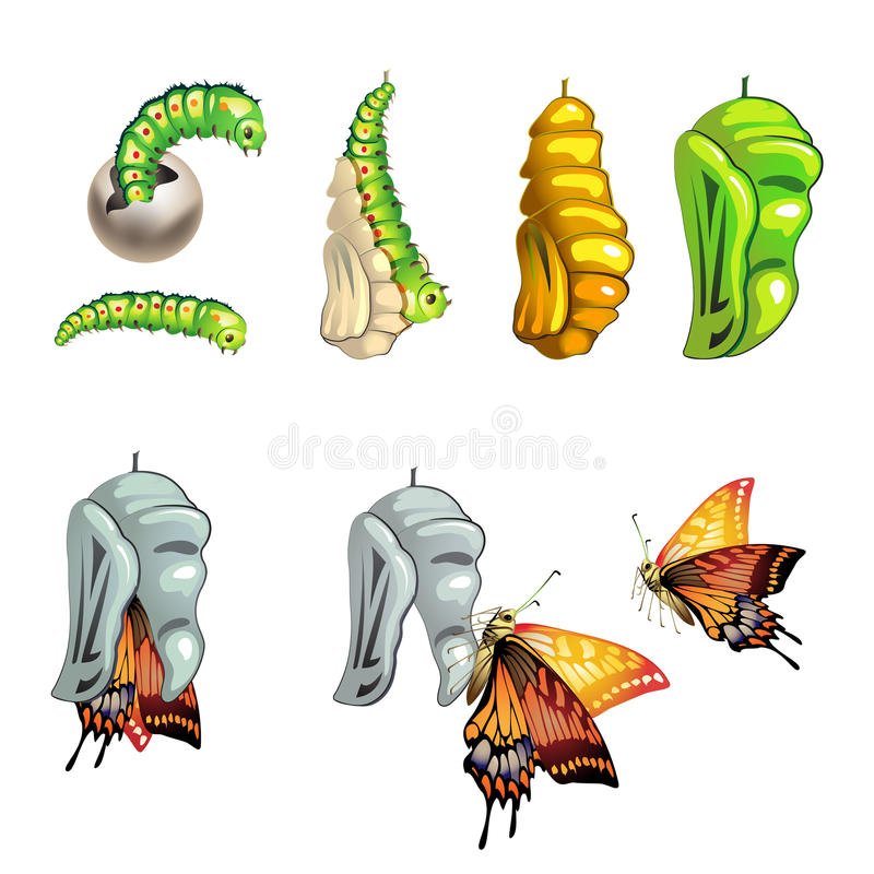 Etapas de la mariposa ilustración del vector